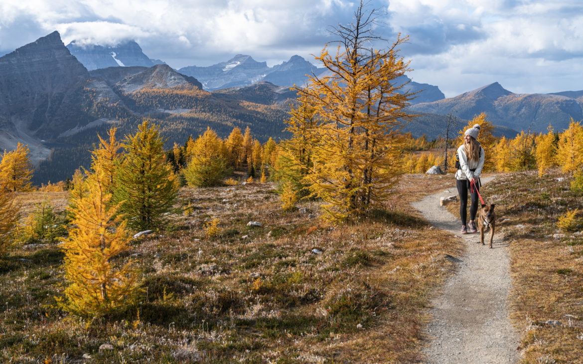 5 Must Do Beginner Hikes in the Canadian Rockies